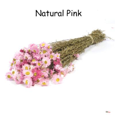 Acroclinium / Natural Pink