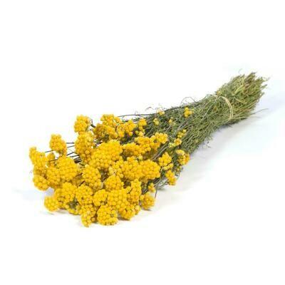 Lona\ Natural Yellow