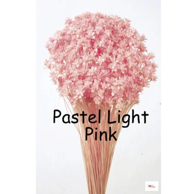 Hill Flower / Pastel Light Pink