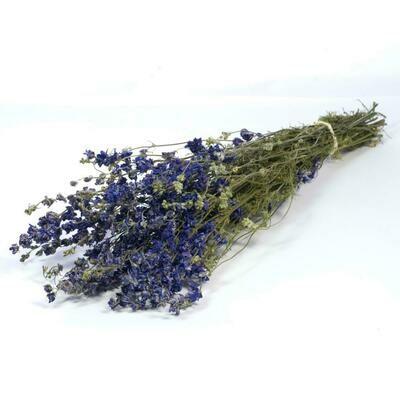 Delphinium / Natural Blue