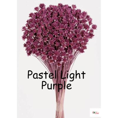 Hill Flower / Pastel Light Purple