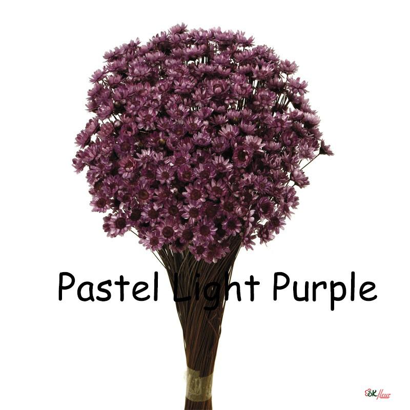 Glixia / Pastel Light Purple