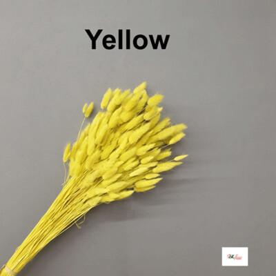 Lagulus / Yellow