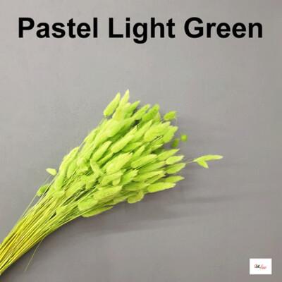 Lagulus / Pastel Light Green