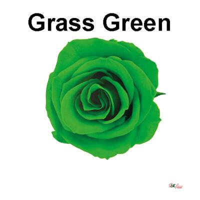 Spray Rose / Grass Green