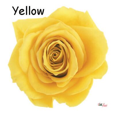 Premium Rose / Yellow