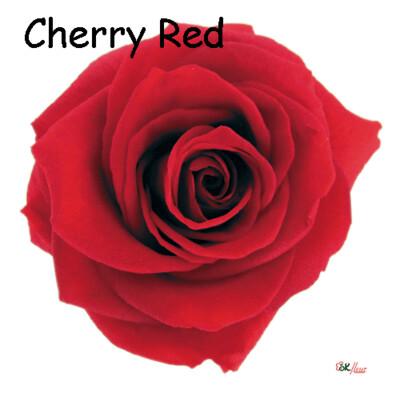 Premium Rose / Cherry Red