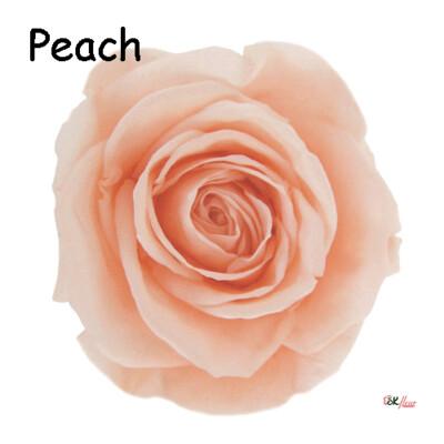Premium Rose / Peach