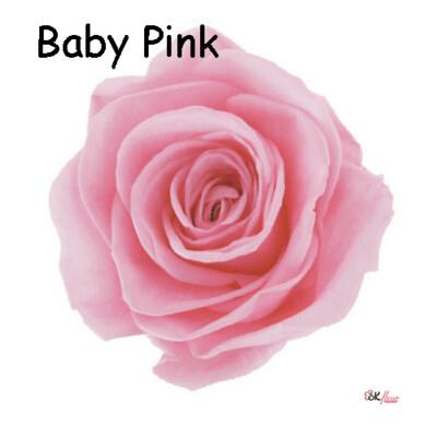 Premium Rose / Baby Pink