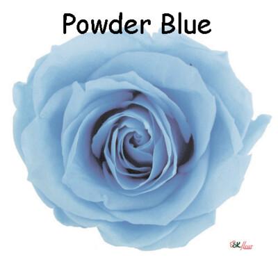 Premium Rose / Powder Blue