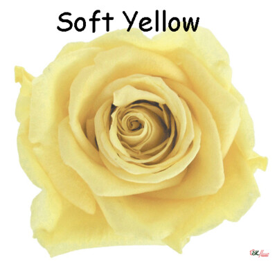 Premium Rose / Soft Yellow