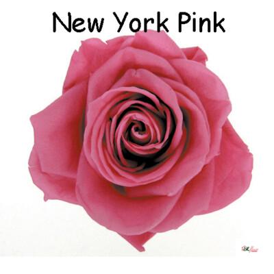 Premium Rose / New York Pink