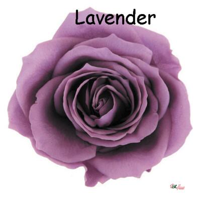 Premium Rose / Lavender