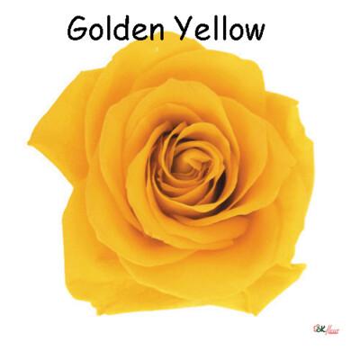 Premium Rose / Golden Yellow