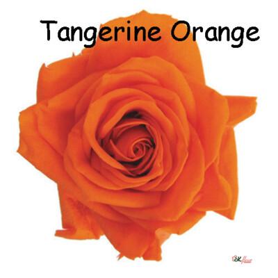 Premium Rose / Tangerine Orange