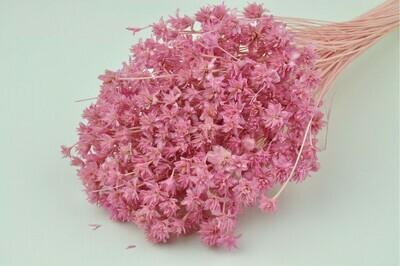 Hill Flower / Pastel Pink