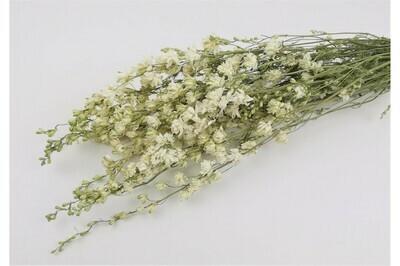 Delphinium / Natural White