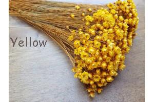 Glixia / Pastel Yellow