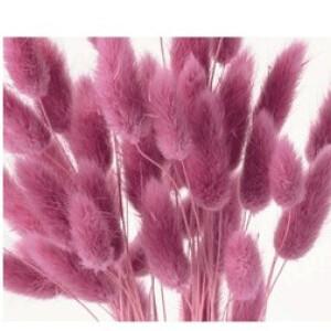 Lagulus / Pastel Hot Pink