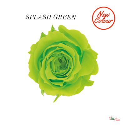 Piccola Blossom Rose / Splash Green