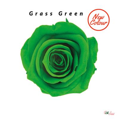 Mediana Rose / Grass Green