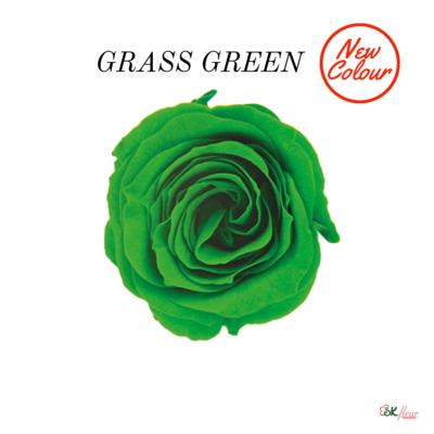 Piccola Blossom Rose / Grass Green