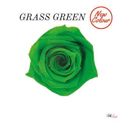 Baby Rose / Grass Green