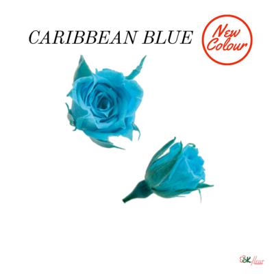 Micro Rose / Caribbean Blue