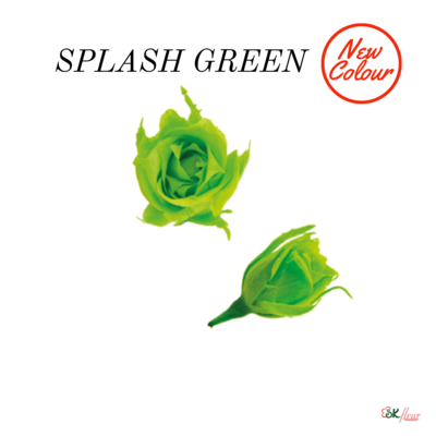 Micro Rose / Splash Green