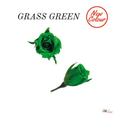 Micro Rose / Grass Green