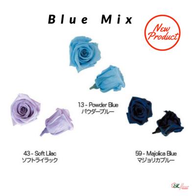 Baby Rose / Blue Mix