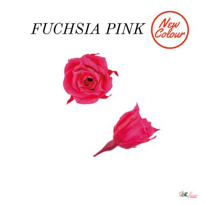 Micro Rose / Fuchsia Pink