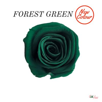 Spray Rose / Forest Green