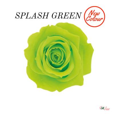 Spray Rose / Splash Green