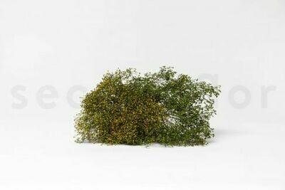 STABILIZED BROOM FLOWER - GREEN