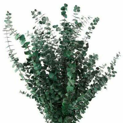 Eucalyptus Baby Blue / Green