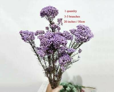 Rice Flowers \ Natural Lilac