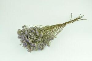 Limonium - Natural Purple