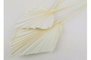 Palm Spear/Paster White