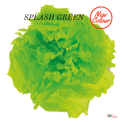 Mini Carnation / Splash Green