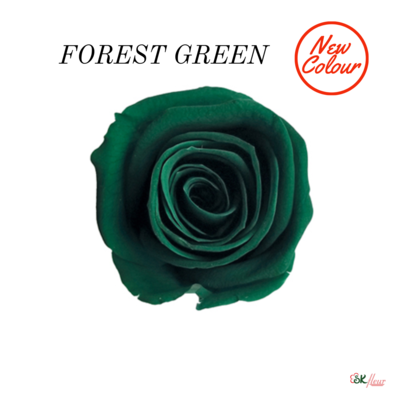 Piccola Blossom Rose / Forest Green