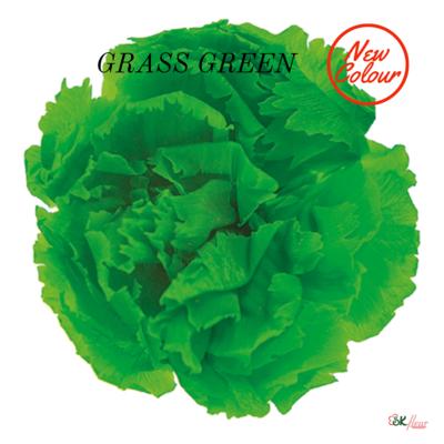 Mini Carnation / Grass Green