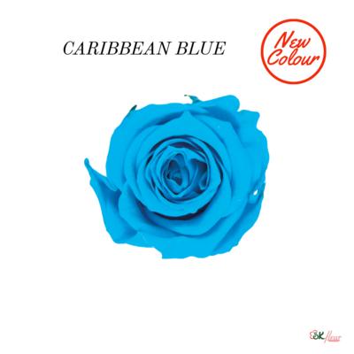 Piccola Blossom Rose / Caribbean Blue