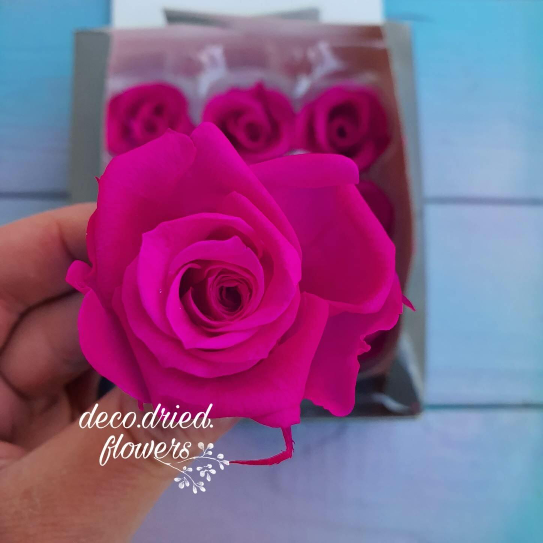 Роза фуксия 3-4см стабилизированная
