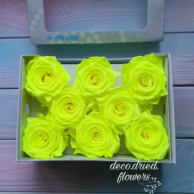 Роза желтая 6,5-7см  стабилизированная neon yellow