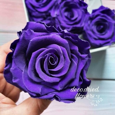 Роза фиолетовая 6,5-7см стабилизированная eminence