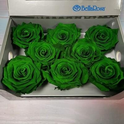 Роза зеленая 6,5-7см стабилизированная green lu
