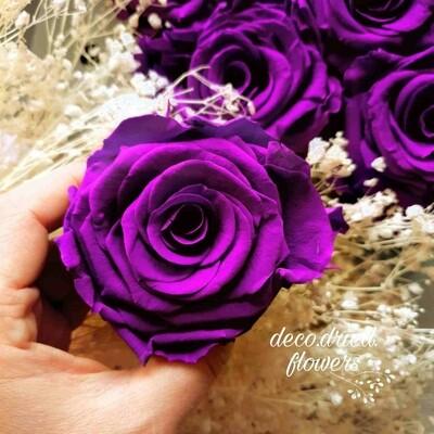 Роза фиолетовая 6,5-7см стабилизированная violet