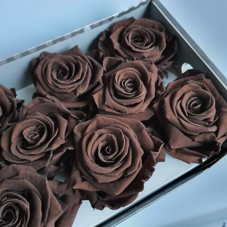 Роза коричневая 6,5-7см стабилизированная caffeto