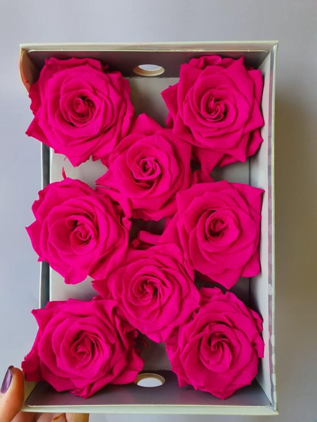 Роза фуксия 6,5-7см стабилизированная moonjet